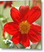 Red And Yellow Beauty Metal Print