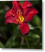 Red And Yellow Daylily  Metal Print