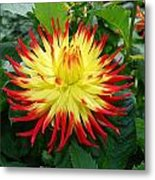 Red And Yellow Flower Metal Print