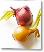 Red And Yellow Onion With Sprout Metal Print