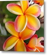 Plumeria Smoothie Metal Print