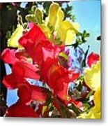Red And Yellow Snapdragons I Metal Print by Aya Murrells