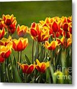 Red And Yellow Tulips II Metal Print