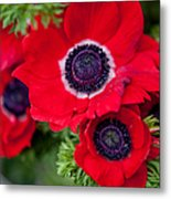 Red Anemone. Flowers Of Holland Metal Print