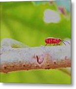 Red Aphid On A Limb Metal Print