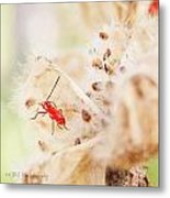 Red Aphid Seed Pod Metal Print