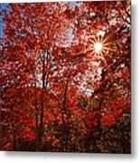 Red Autumn Leaves Metal Print