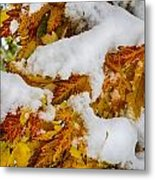 Red Autumn Maple Leaves With Fresh Fallen Snow Metal Print