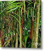 Red Bamboo Metal Print