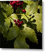 Red Baneberry   #8955 Metal Print