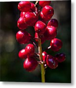 Red Baneberry   #8986 Metal Print