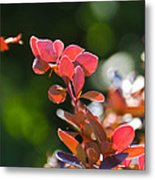 Red Barberry Metal Print