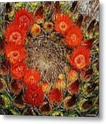 Red Barell Cactus Flowers Metal Print