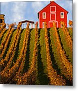 Red Barn In Autumn Vineyards Metal Print