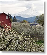 Red Barn In Hood River Pear Orchard Metal Print