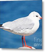 Red-beaked Seagull Resting On The Port Metal Print