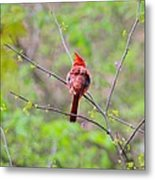 Red Beauty Metal Print by Candice Trimble