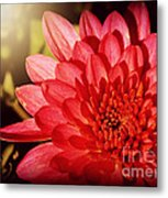 Red Beauty Welcomes The Sun - Flowers Of Summer Metal Print