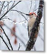 Red Bellied Woodpecker In Winter Metal Print