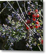 Red Berries And Violet Flowers Metal Print