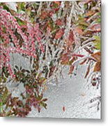Red Berries Over Snow Metal Print
