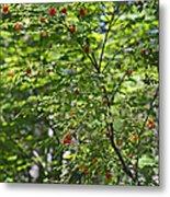 Red Berries Metal Print