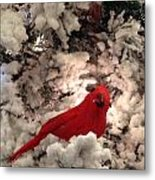Red Bird In A Snow Covered Tree Metal Print