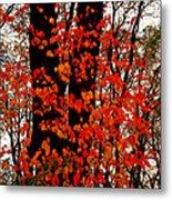 Red Blaze Burst Metal Print