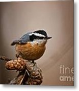 Red-breasted Nuthatch Pictures 36 Metal Print
