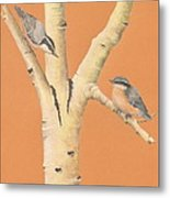 Red-breasted Nuthatches On Aspen Metal Print