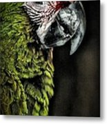 Red Browed Amazon Parrot Metal Print