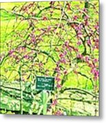 Red Bud Cascade Metal Print