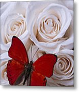 Red Butterfly Among White Roses Metal Print