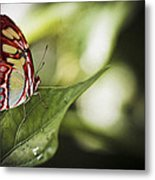 Red Butterfly Metal Print