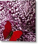 Red Butterfly On Red Mum Metal Print