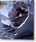 Red Cabbage Abstract Metal Print