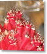 Red Cactus Metal Print by Anais DelaVega