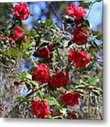 Red Camellias And Blue Sky Metal Print