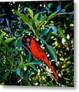 Red Cardinal 1 Metal Print