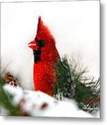 Red Cardinal Metal Print