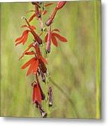 Red Cardinal Flower Metal Print
