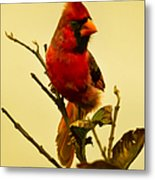 Red Cardinal No. 2 - Kauai - Hawaii Metal Print