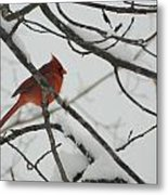 Red Cardinal On Snow Covered Tree Limb Metal Print