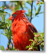 Red Cardinal Pink Blooms Metal Print