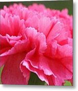 Red Carnation  Metal Print
