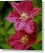 Red Clematis Flowers Metal Print