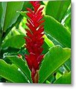 Red Cone Ginger Metal Print