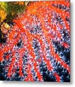 Red Coral Metal Print by Roberto Galli della Loggia