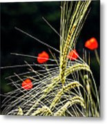 Red Corn Poppies Metal Print by Heiko Koehrer-Wagner