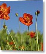 Red Cosmos Flower Metal Print